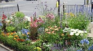 Bounds Green flower bed