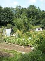 grove and railway bank allotment